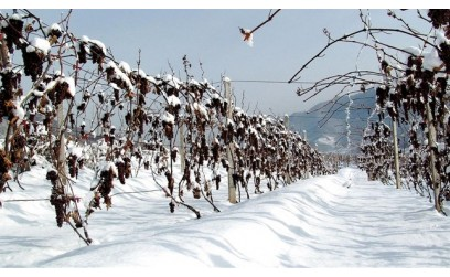 Cos'è l' Ice Wine?